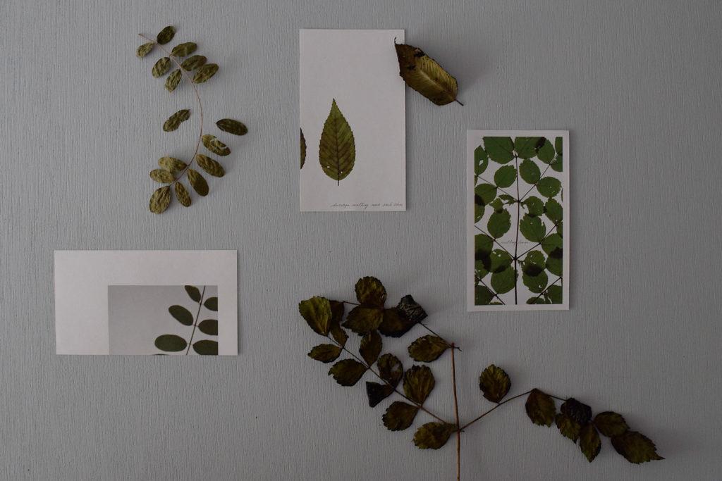 実際に山で集めた葉っぱたち。葉脈や葉の重なりの様子を、ライボックスの上に乗せて撮影した写真です。